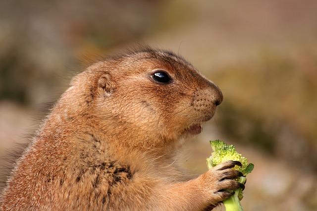 brokkoli - fogyókúra barát étel